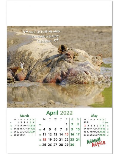animal-antics-wall-calendar-april-2022.jpg