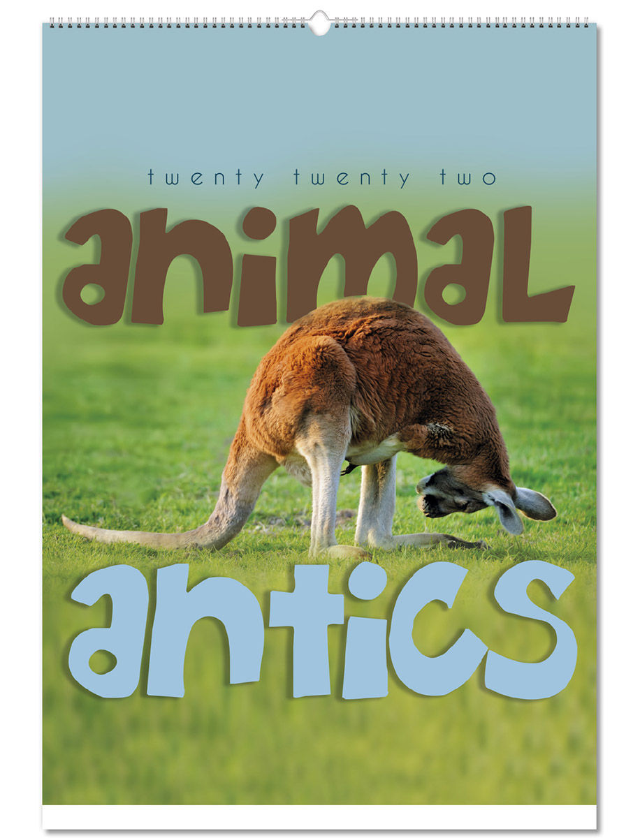 Animal Antics Wall Calendar