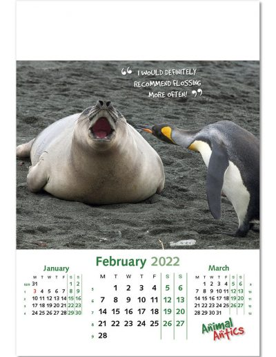 animal-antics-wall-calendar-february-2022.jpg