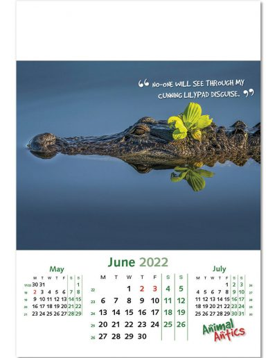animal-antics-wall-calendar-june-2022.jpg