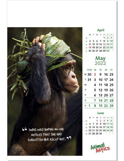 animal-antics-wall-calendar-may-2022.jpg
