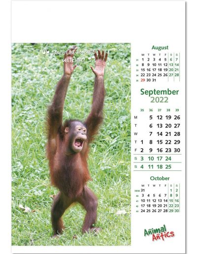 animal-antics-wall-calendar-september-2022.jpg