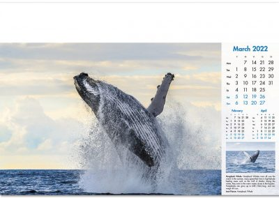 blue-planet-wall-calendar-march-2022.jpg